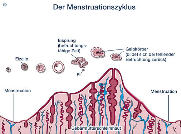 bg_menstruationszyklus