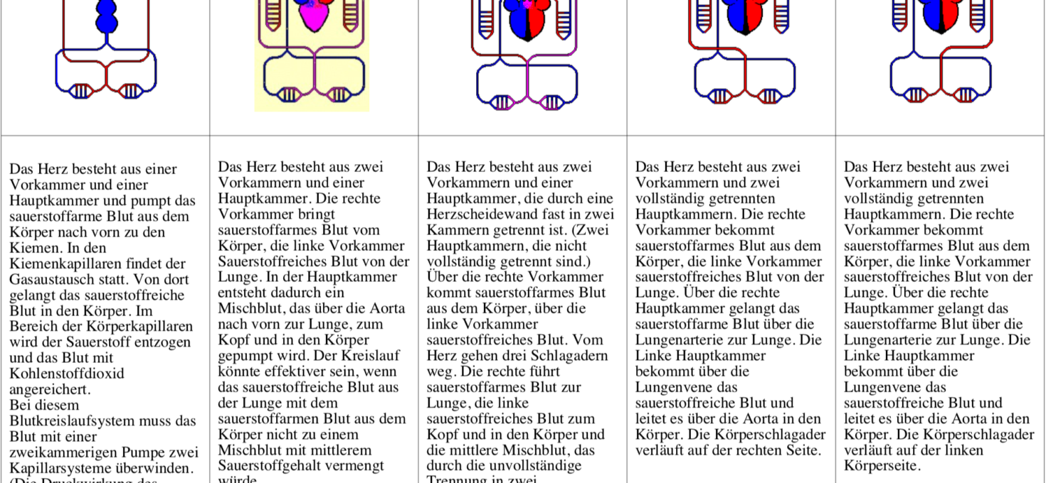 Blutkreisläufe verschiedener Wirbeltierklassen